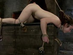 a bit plumpy girl gets hogtied and made to cum